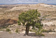 Free Grand Staircase Escalante National Monument Royalty Free Stock Images - 17966969