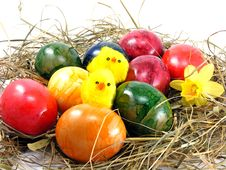 Free Easter Eggs & Chicks Royalty Free Stock Images - 17967909