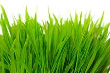 Free Green Grass Stock Image - 17967971