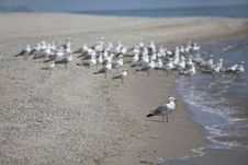 Free Seagulls On The Beach Royalty Free Stock Photography - 17968417