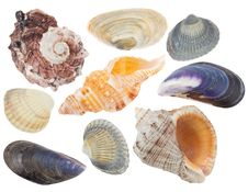 Set Of Seashells Royalty Free Stock Photos