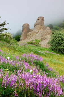 Free Flowers And Rocks In Mountains Stock Photos - 17969983