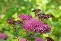 Free Field Flower Stock Photo - 17970760