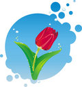 Free Illustration Of Red Tulip Stock Images - 17977474