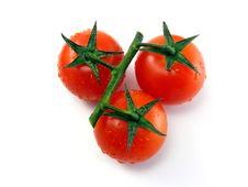 Free Tomatoes On White Background Stock Photo - 17970500
