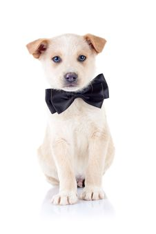 Free Puppy Wearing A Ribbon At It S Neck Stock Photography - 17970582