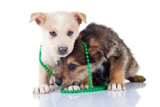 Free Two Very Shy Puppies Stock Photos - 17970623