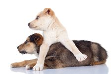 Free Cute Stray Puppies Looking To A Side Stock Images - 17970634
