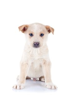Free Seated Homeless Puppy Royalty Free Stock Images - 17970649