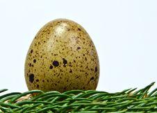 Free Quail Egg Stock Photos - 17971953