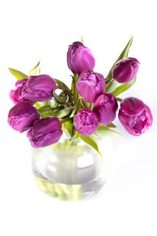 Free Bouquet Of Violet Tulips Stock Photo - 17972260