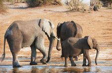Free Group Of Large And Small African Elephants Stock Photo - 17974370