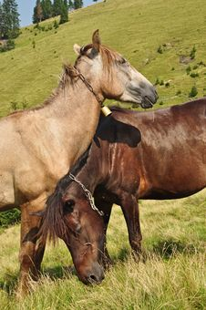 Horses On A Hillside Royalty Free Stock Photos