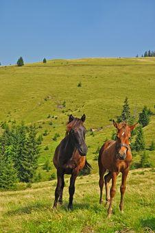 Free Horses On A Hillside Stock Photos - 17974623
