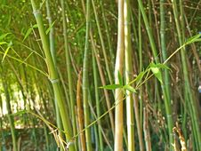 Free Bamboo Background Stock Photo - 17975050