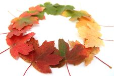 Free Autumn  Bright-colored Leaves Royalty Free Stock Photo - 17975375