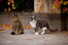 Cat And Cat In The Street Royalty Free Stock Photo