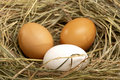 Free Three Chicken Eggs Royalty Free Stock Images - 17982359