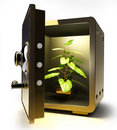 Free Golden Safe With Flower In A Pot Royalty Free Stock Photography - 17983267