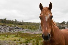 Free Bush Horse Royalty Free Stock Photo - 17981785