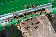Beehive And Bee Stock Photography