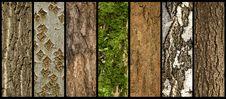 Free Barks Of Trees Royalty Free Stock Photos - 17982268