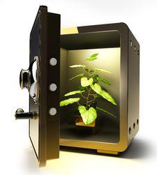 Golden Safe With Flower In A Pot Royalty Free Stock Photography