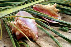 Free Sea Shell Stock Photo - 17984440