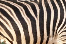 Free Zebra Background Royalty Free Stock Photo - 17986725