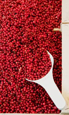 Free Basket Full With Cowberries Stock Photography - 17986772