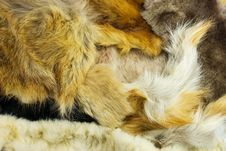 Free Fur Of Different Animals Stock Image - 17987001