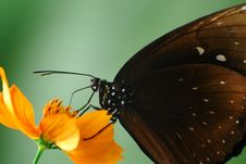 Free Butterfly At The Flower Royalty Free Stock Photos - 17987118
