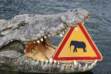 Free Funny Crocodile Royalty Free Stock Photos - 17987258
