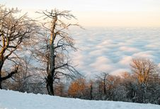 Trees Above The Clouds Stock Images