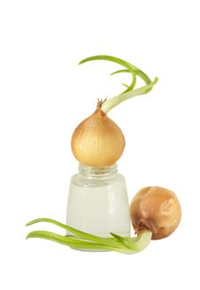 The Sprouted Onions Stock Images
