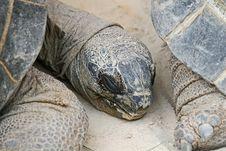 Turtle Head Stock Photography