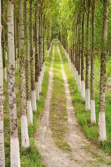 Free Alley, Trees And Way Stock Images - 17989044
