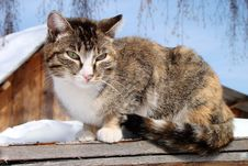 Free Cat Royalty Free Stock Image - 17989126