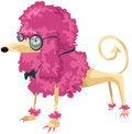Free Poodle Royalty Free Stock Photo - 17993435