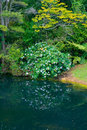 Free Small Lake In A Forest Royalty Free Stock Image - 17999576