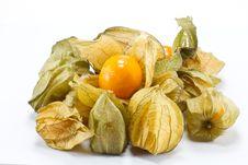 Free Physalis Fruit Stock Image - 17990071