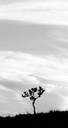 Free Lone Tree Stock Photos - 17991123