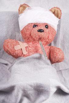 Free Bear Cub Stock Photos - 17992903