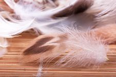 Free Feathers Royalty Free Stock Photos - 17993108