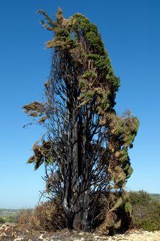 Free Burnt Tree Stock Photos - 17997373