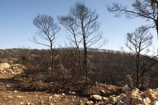 Free Burnt Tree Stock Photo - 17997390