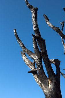 Free Burnt Tree Stock Images - 17997404