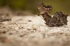 Free Basking Butterfly Stock Photography - 17998152