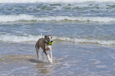 Free Dog And Beach Fun Royalty Free Stock Photo - 17998955