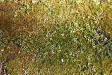 Free Mossy Ground Cover Royalty Free Stock Photo - 180965
